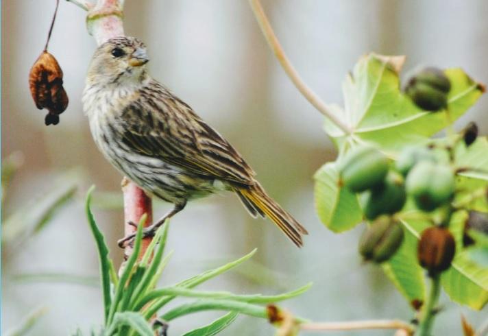 Curso gratuito capacitará setor turístico da Costa Verde & Mar na atividade de observação de aves